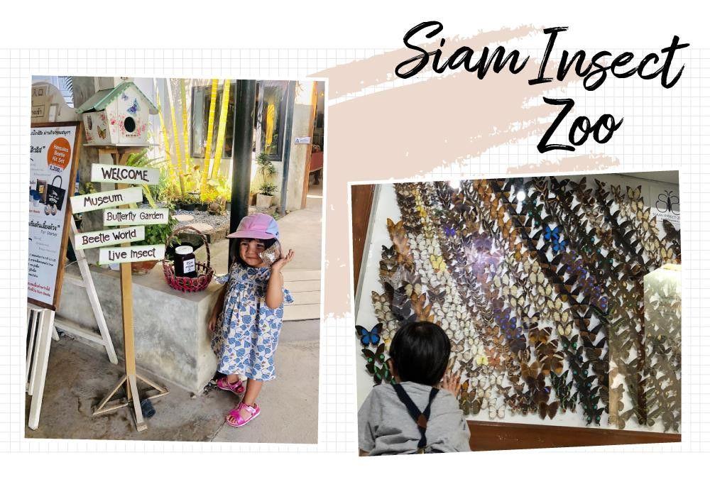 Chiang Mai (Thái Lan): Điểm đến yêu thích của những gia đình có con nhỏ (3)