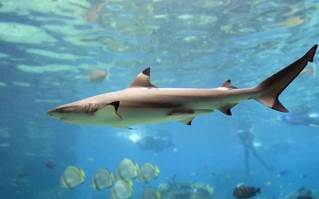 Khám phá đảo Koh Phi Phi (Thái Lan) & trải nghiệm tour bơi cùng cá mập (10)