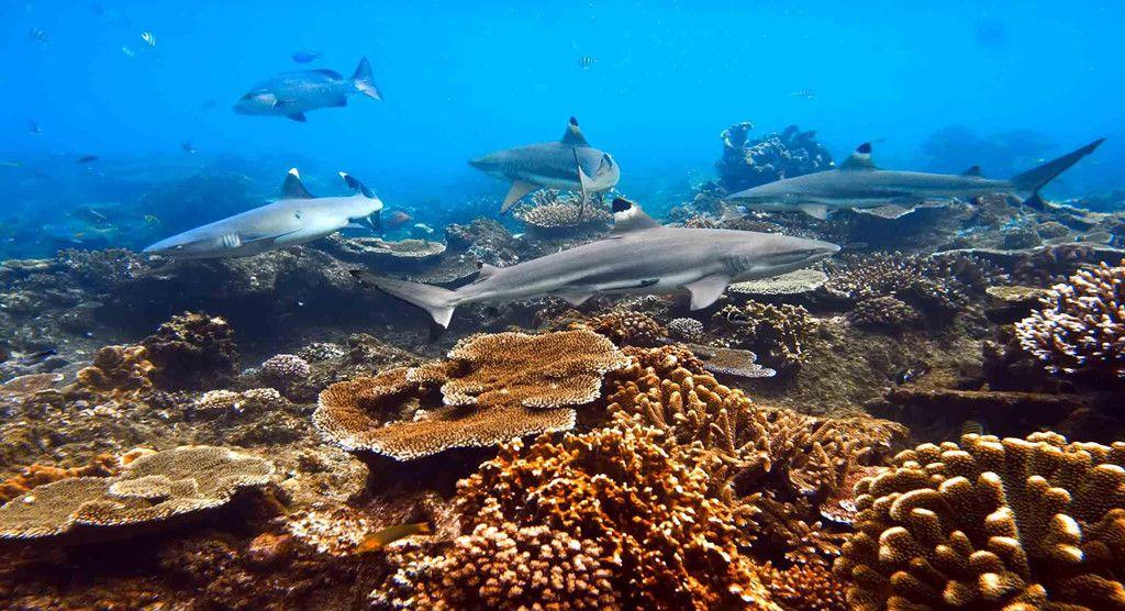 Khám phá đảo Koh Phi Phi (Thái Lan) & trải nghiệm tour bơi cùng cá mập (15)