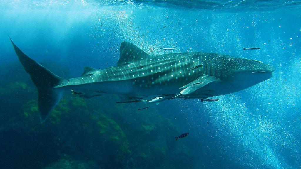 Khám phá đảo Koh Phi Phi (Thái Lan) & trải nghiệm tour bơi cùng cá mập (12)
