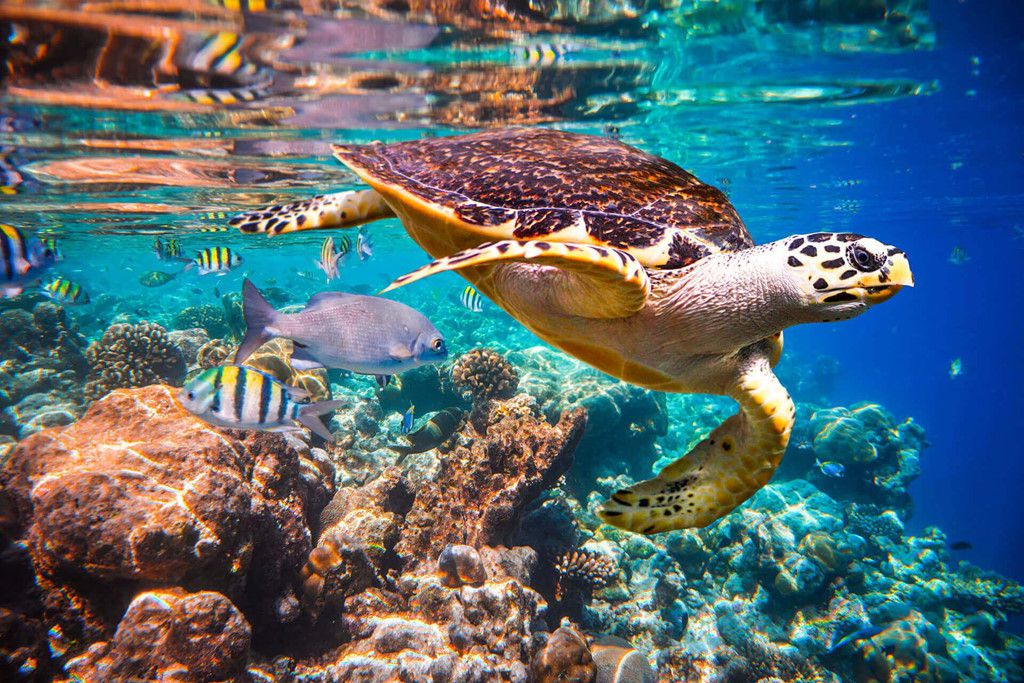 Khám phá đảo Koh Phi Phi (Thái Lan) & trải nghiệm tour bơi cùng cá mập (13)