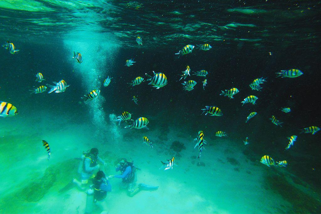 Khám phá đảo Koh Phi Phi (Thái Lan) & trải nghiệm tour bơi cùng cá mập (7)