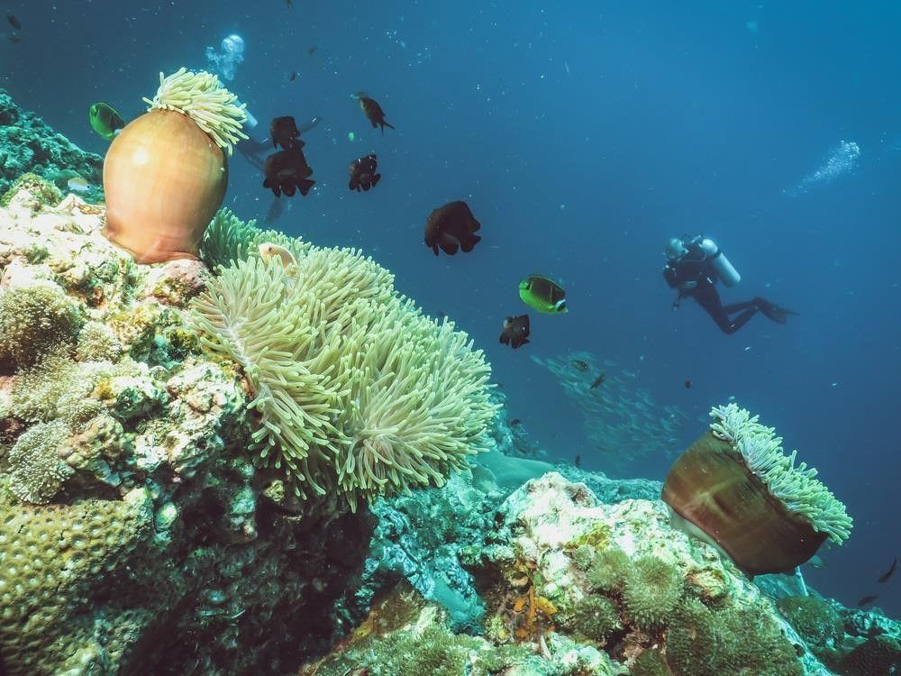 Khám phá đảo Koh Phi Phi (Thái Lan) & trải nghiệm tour bơi cùng cá mập (8)