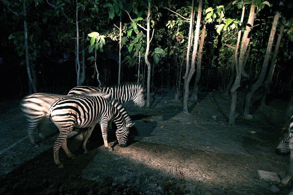 Chiang Mai (Thái Lan): Thiên đường vui chơi dành cho các du khách nhí (3)