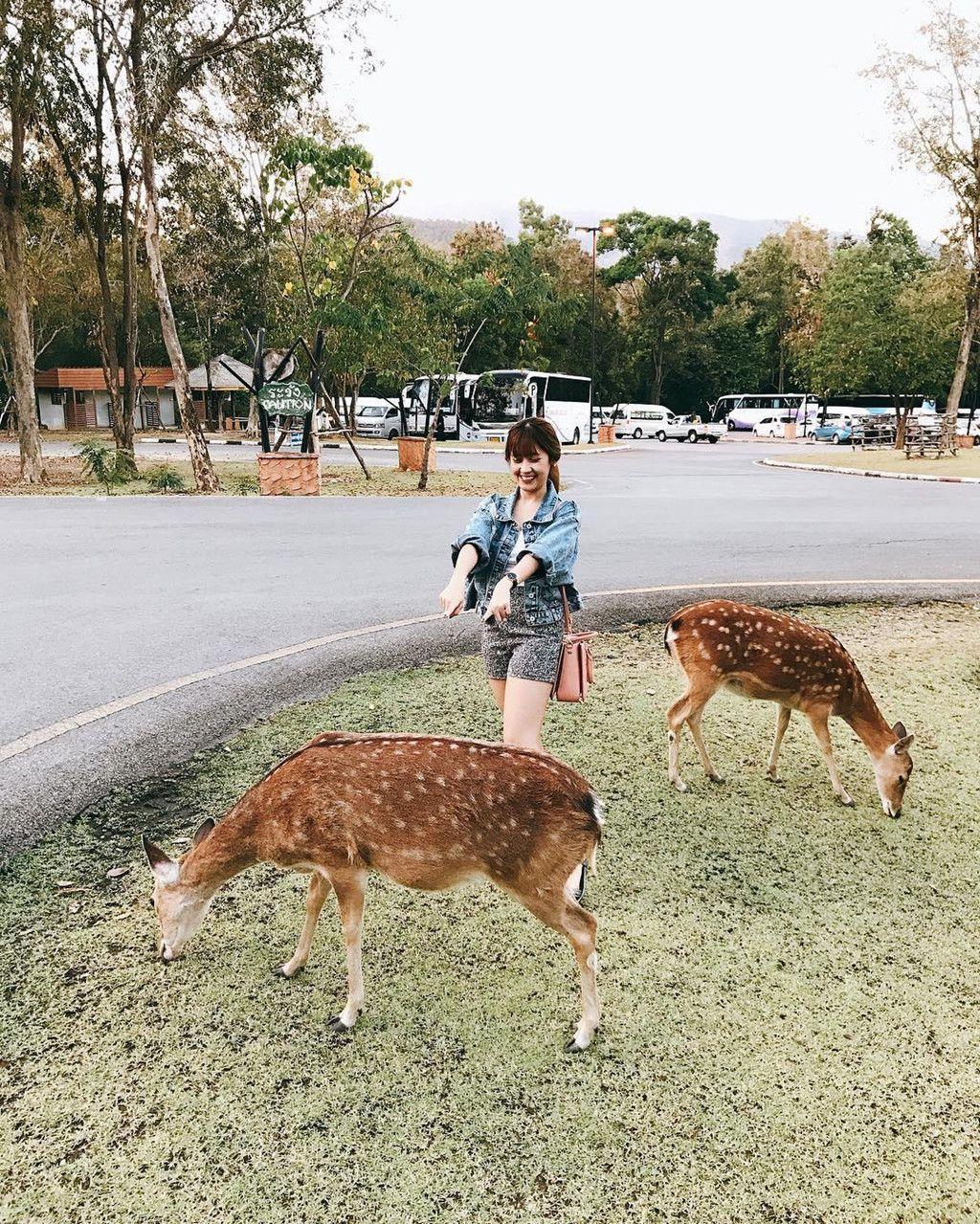 Chiang Mai (Thái Lan): Thiên đường vui chơi dành cho các du khách nhí (5)